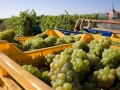 Our grape baskets become some of the best wines of the area