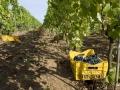 Great vineyards and natural treatments