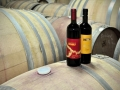 Our wines: our speciality and the best quality imaginable