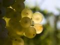 uva-perfetto-stato